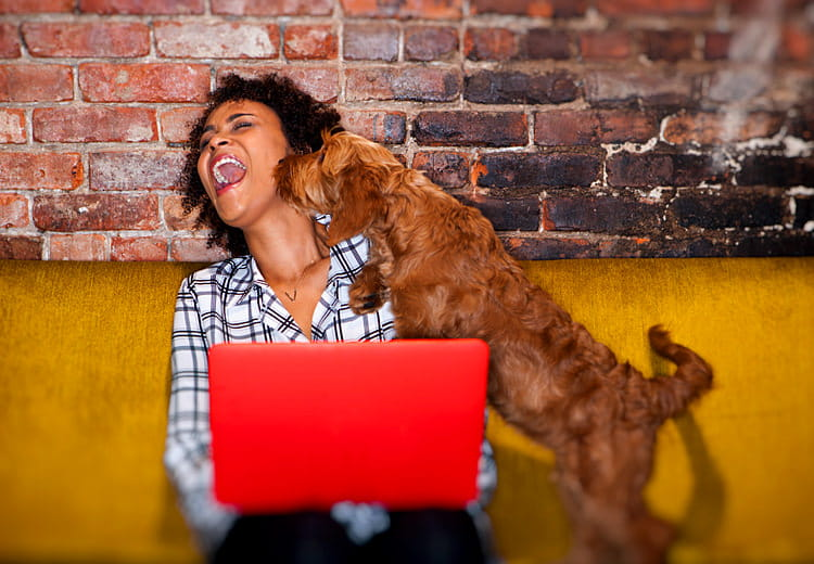 Woman on sofa using red laptop is licked by dog